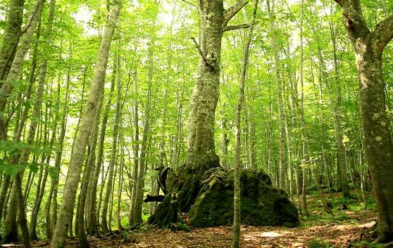「世界自然遺産 白神山地」の写真